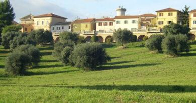 La raccolta delle olive ieri e oggi nel nostro territorio
