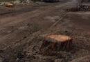 """Gli ambientalisti del Gsa sul taglio dei pini: """"Quanto avvenuto in via Don Minzoni non può passare in sordina"""""""